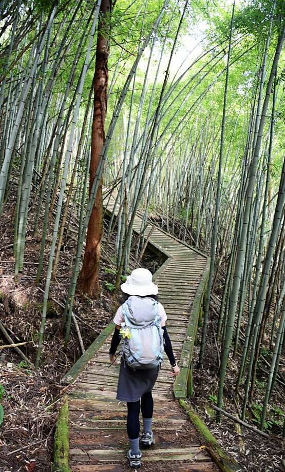 A bamboo thicket surrounds a hiker passing through the Nakasendo trail.  Photo: Bill Fink, Special To The Chronicle