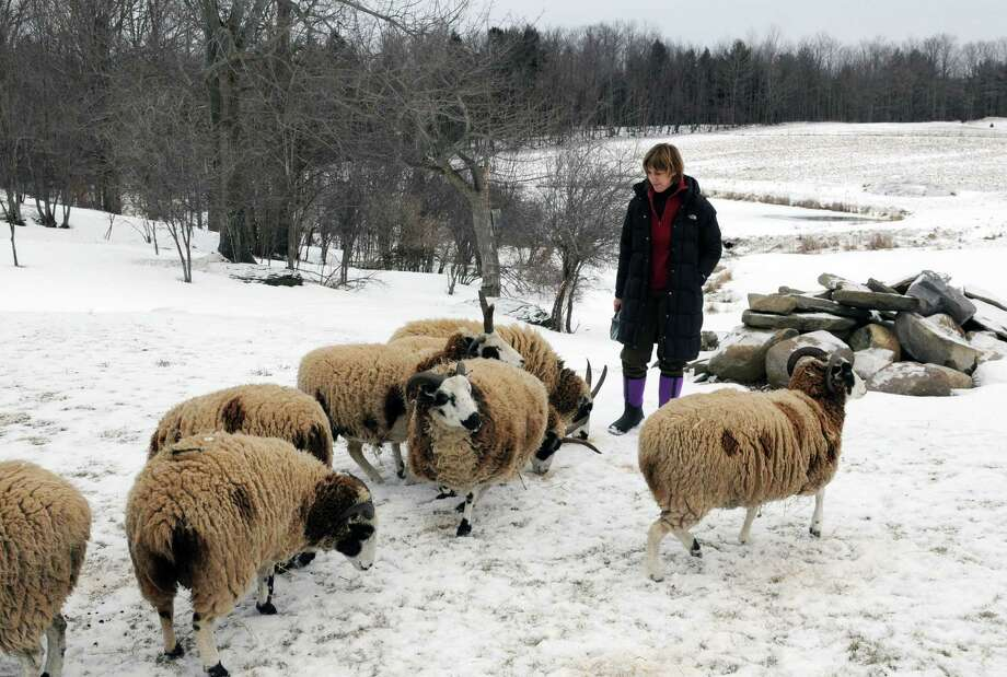 Senator-elect Cecilia Tkaczyk puts down feed for her flock of Jacob breed sheep Monday afternoon, Jan. 21, 2013, at the Tkaczyk?s farm in the town of Duanesburg N.Y. (Will Waldron/Times Union) Photo: Will Waldron