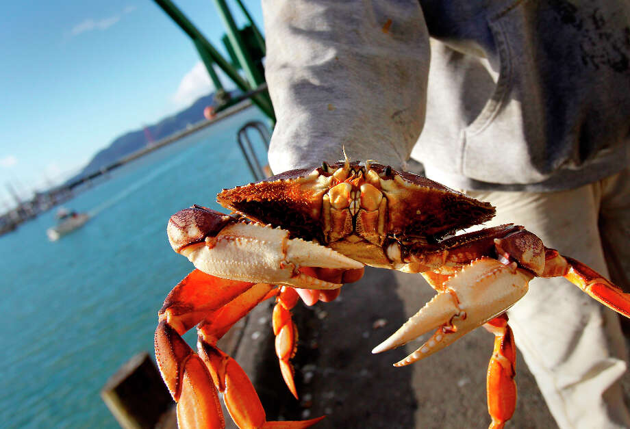 San Francisco's Dungeness.Winner: S.F. Great crab doesn't need smothering in Old Bay seasoning. Photo: Brant Ward, The Chronicle / ONLINE_YES