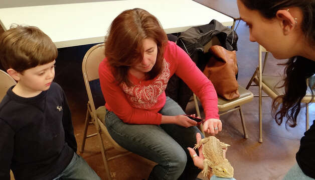 Kathy Watcke touches Vega the Bearded Dragon while her son Colme and naturalist Caitlin Holmberg look on during the lizards program at Conecticut Audubon Society's Fairfield center last Thursday.  FAIRFIELD CITIZEN, CT 1/17/13 Photo: Mike Lauterborn / Fairfield Citizen contributed