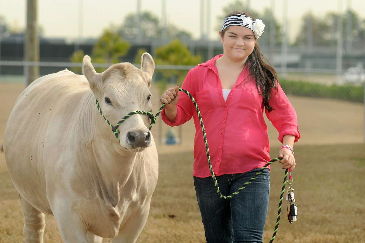 Cheyanne Foster, 16, a sophomore at Tomball Memorial High School, walks Cuder, her Charolais-cross steer, at the Tomball ISD Ag barn. Cuder is the first steer she has raised. Freelance photo by Jerry Baker