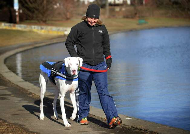 Swani Schoberth of Stratford takes a chilly walk with her dog Moonshine at Longbrook Park in Stratford on Tuesday, January 22, 2013. The dog is undergoing socialization training because she was born deaf, a result according to Schoberth of breeding meant to produce an all white Great Dane. Photo: Brian A. Pounds