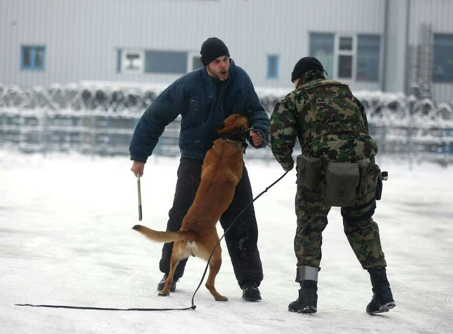 A dog handler from the Swiss army practices an arrest during a security exercise at their base in Thusis, Switzerland, on Tuesday, Jan. 22, 2013. As policy makers and executives debate the latest remedies to draw a line under Europe's worst crisis since World War II, Swiss officers are now using the World Economic Forum as a testing ground for plans to turn the entire country into a fortress. Photographer: Simon Dawson/Bloomberg Photo: Simon Dawson, Bloomberg / Copyright 2013 Bloomberg Finance LP, All Rights Reserved.