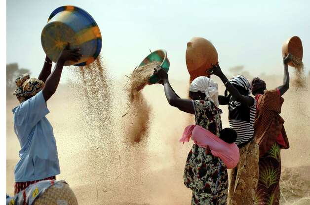 Malian women sift wheat in a field near  Segou, central Mali, some 240kms (140 miles) from Bamako Tuesday, Jan. 22, 2013.  French troops in armored personnel carriers rolled through the streets of Diabaly on Monday, winning praise from residents of this besieged town after Malian forces retook control of it with French help a week after radical Islamists invaded. The Islamists also have deserted the town of Douentza, which they had held since September, according to a local official who said French and Malian forces arrived there on Monday as well. (AP Photo/Jerome Delay) Photo: Jerome Delay