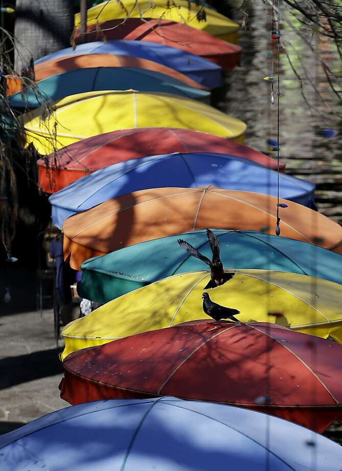 Pigeons roost on umbrellas  above diners at a restaurant  along the San Antonio Riverwalk, Tuesday, Jan. 22, 2013, in San Antonio. (AP Photo/Eric Gay) Photo: Eric Gay, Associated Press
