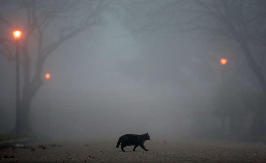 Fog looms as a cat crosses the street Wednesday, Jan. 23, 2013, in Houston.Related story: Foggy roads are headaches for Houston commuters. Photo: Cody Duty, Houston Chronicle / © 2012 Houston Chronicle