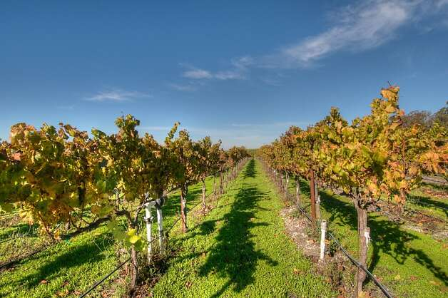 More than 20 acres of the property are devoted to chardonnay and pinot noir grapes. Photo: Matt McCourtney, McCourtney Photographics