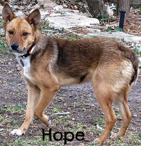 Hope is available for adoption. Photo: Courtesy Photo
