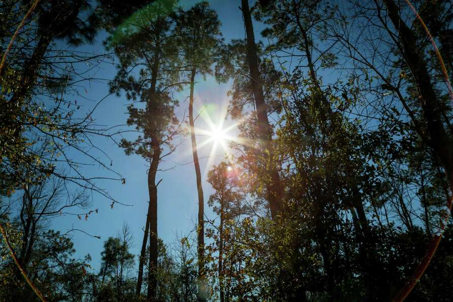 The sun shines on a wooded area at the Chambers County Safety Rest Area, 1-hour east of Houston, Thu