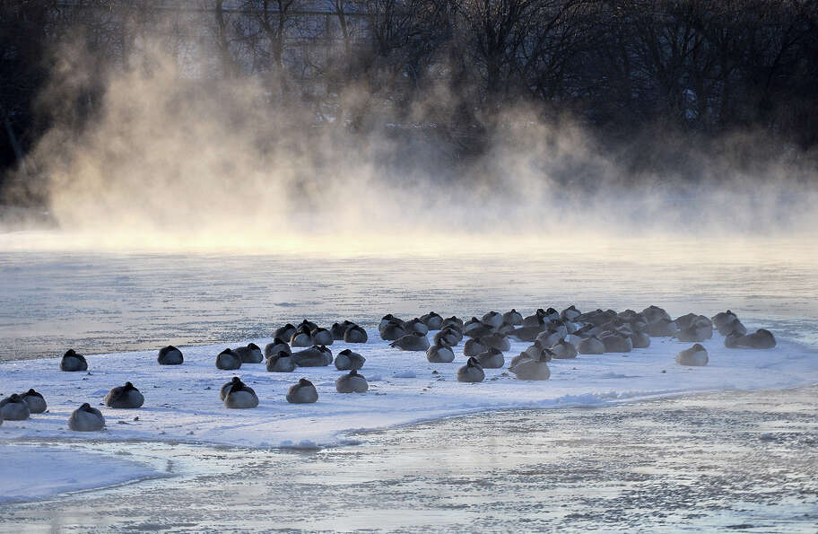 A flock of geese huddles to stay warm on a slab of ice enveloped by steam on the Rock River in Water