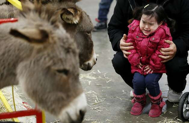 Donkeys are scary: Cringing 2-year-old Joy Leroux is held by her father as curious burros approach at a kids zoo at the Meadowlands Exposition Center in Secaucus, N.J. Photo: Julio Cortez, Associated Press