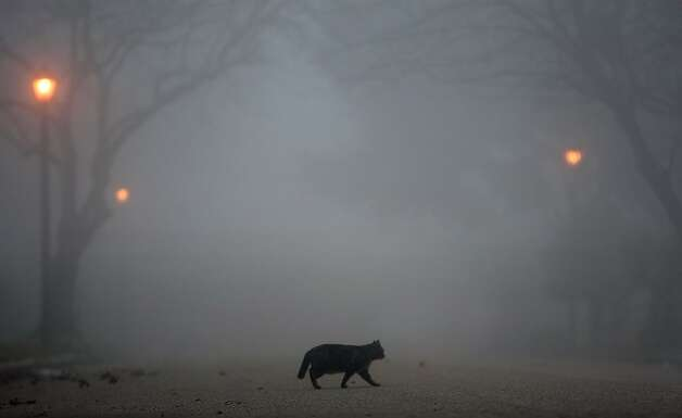 Fog looms as a cat crosses the street Wednesday, Jan. 23, 2013, in Houston.  Photo: Cody Duty, Associated Press