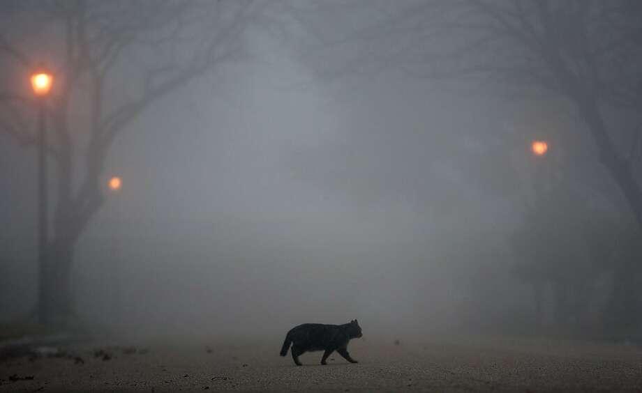 Fog looms as a cat crosses the street Wednesday, Jan. 23, 2013, in Houston.  Photo: Cody Duty, Associated Press