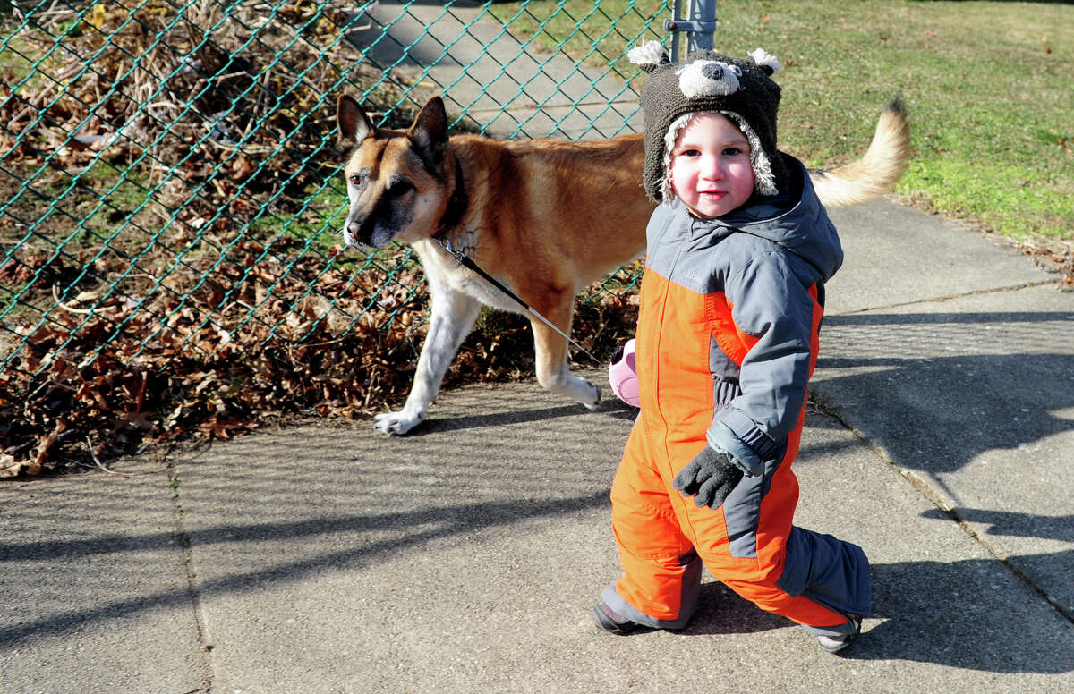 Two-year-old Dylan Whybrow walks his dog Corey near their Stratford, Conn. home Wednesday Jan. 23, 2013.