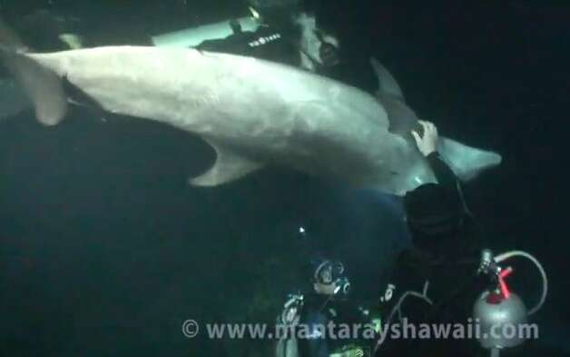 In this screengrab of a video published by MantaRaysHawaii you can see divers trying to remove a hook and line from a wild bottlenose dolphin in the waters off Hawaii.