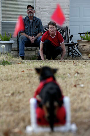 Malcolm and Gini Clements watch Scooter use the wheelchair they made for him to support his back legs at their home in Live Oak on Wednesday, Jan. 23, 2013. Photo: Lisa Krantz, San Antonio Express-News / © 2012 San Antonio Express-News