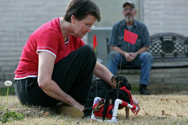 Gini Clements plays with Scooter as her husband, Malcolm, watches. The couple have decided  to adopt Scooter. Photo: Lisa Krantz, San Antonio Express-News / © 2012 San Antonio Express-News