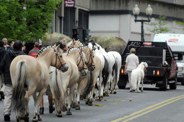 Horses with the Ringling Bros. and Barnum & Bailey Circus show parade to the Times Union Center on Tuesday, May 1, 2012, in Albany, NY.  (Paul Buckowski / Times Union archive) Photo: Paul Buckowski / 00017488A