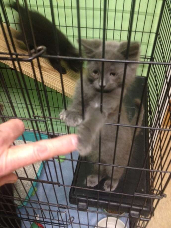 Kitten rescued from home in Wright (photo courtesy of Schoharie County Sheriff's Office).