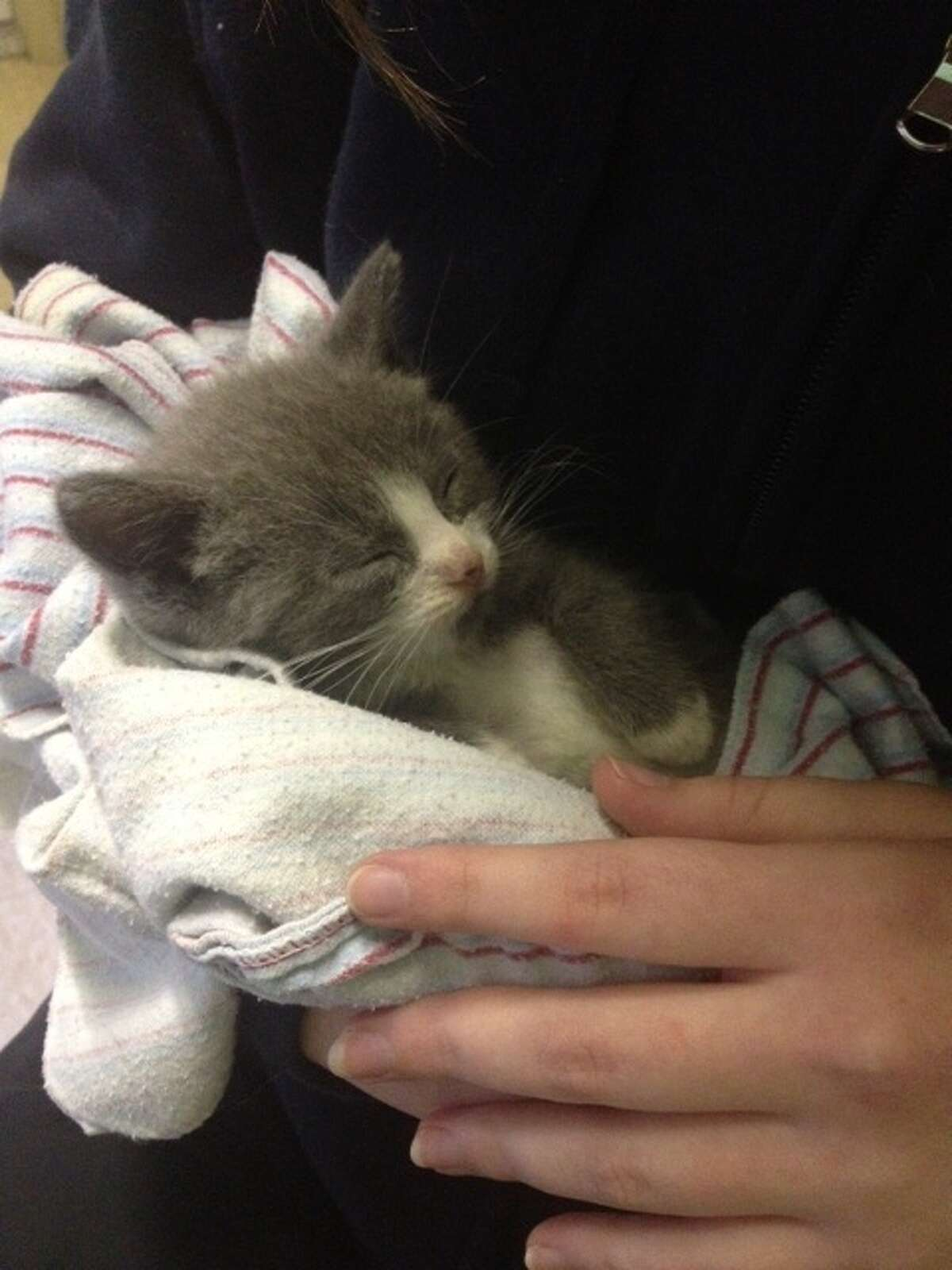 Kitten rescued from home in Wright (Schoharie County Sheriff's Office).