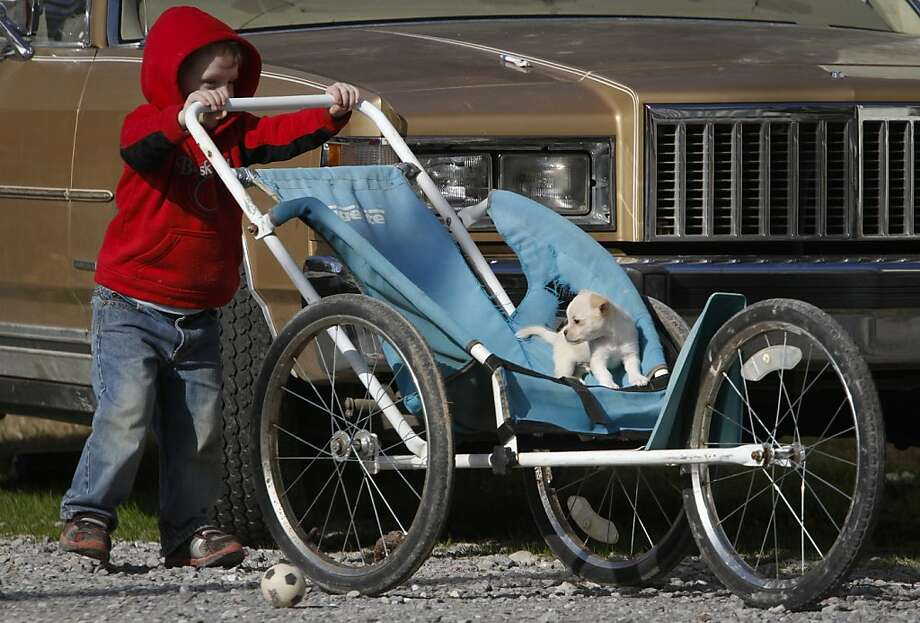 Fortunately the stroller is big enough to contain the beast: Three-year-old Issac Jenkins gives 8-week-old Bentley a ride around the neighborhood in Rossville, Ga. Photo: Dan Henry, Associated Press