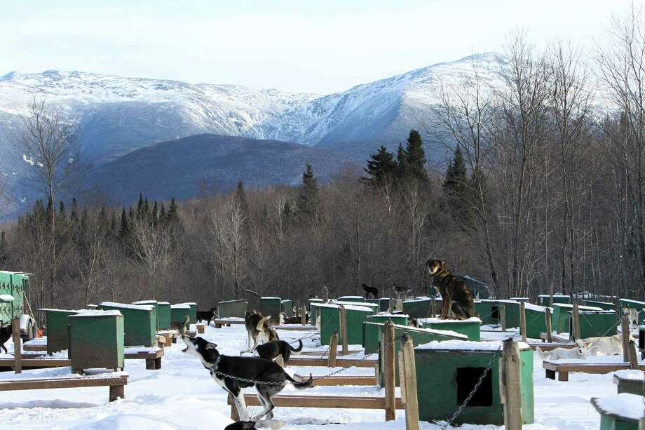 "This photo taken Thursday Jan. 17, 2013 shows sled dogs  at the Muddy Paw Sled dog Kennel in Jefferson, N.H.  The kennel takes in rescues and ""second-chance"" dogs  and is also home to a blind dog that relies on his brother to keep up with the rest of the team. Photo: Jim Cole, AP / AP"