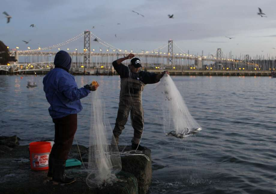 Rudy Domingo (right) pulls up a net filled with herring while fishing with Francis Reyes (left) off China Basin at dawn in San Francisco.