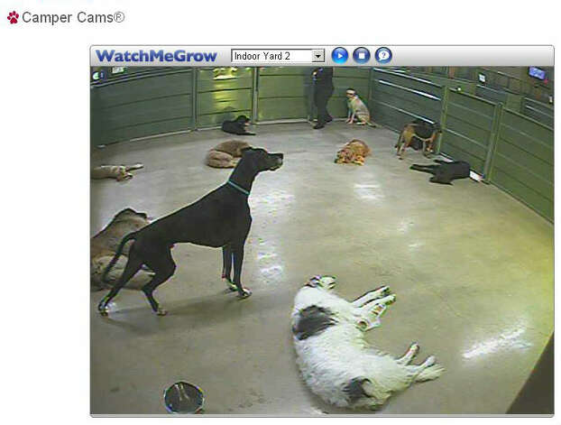 A screengrab of a webcam from a Camp Bow Wow in San Antonio. The dog daycare and boarding facility has webcams so pet owners can look in on their pets. Photo: Screen Grab