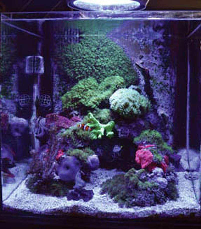 At Eddies Aquarium in Latham.