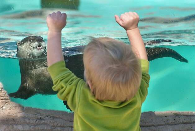 Why is that kid pounding on my window? A boy named Roland Marcum is determined to get the attention of an otter at the Gulf Breeze (Fla.) Zoo. Photo: Devon Ravine, Associated Press