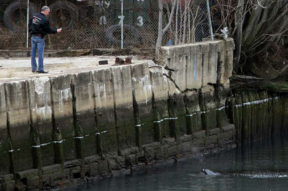 NEW YORK, NY - JANUARY 25:  A man takes a photo of a common dolphin as it comes up for air after getting stuck in a section of the Gowanus Canal on January 25, 2013 in Brooklyn borough of New York City. Officials are waiting till high tide in the hopes that the stuck dolphin will be able to free itself from the canal. Photo: Michael Heiman, Getty Images / 2013 Getty Images