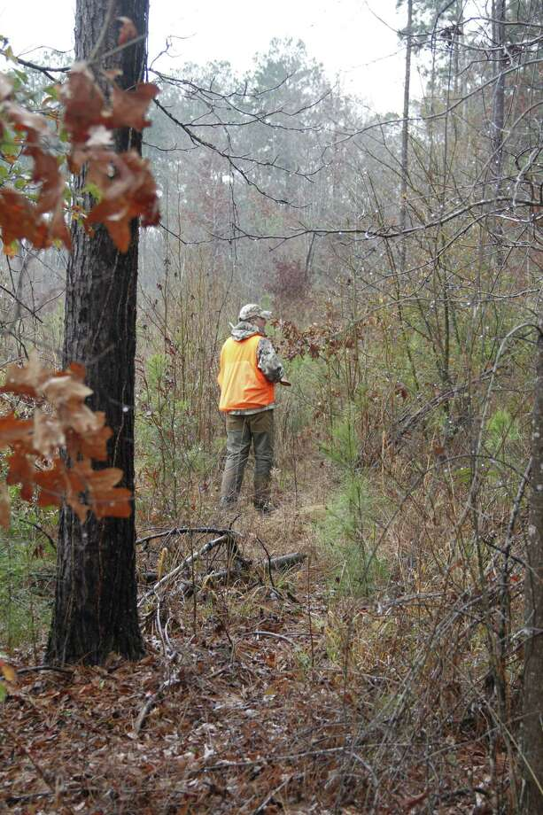 William Heyer works along the edge of a clearcut adjacent to a stand of moist, upland/pine forest - typical cover encountered by woodcock hunters in East Texas. Photo: Shannon Tompkins/Chronicle