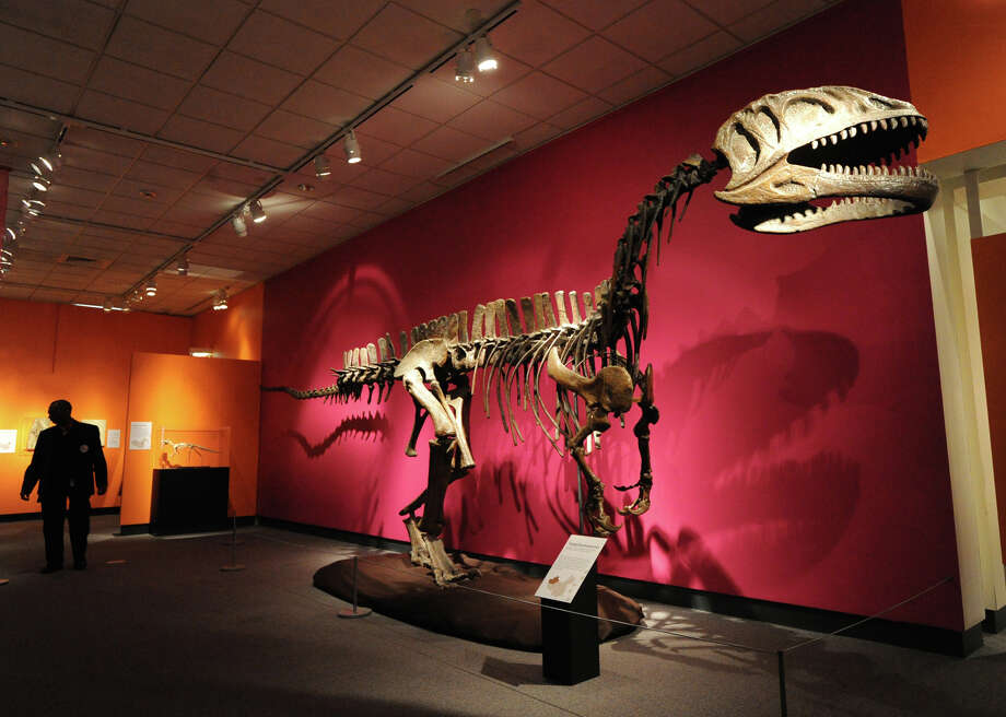 A Yangchuanosaurus skeleton is part of the exhibit âÄúChinasaurs: Dinosaur Discoveries from China,âÄù that also features the skeletons, skulls, nests and eggs of more than a dozen Asian dinosaurs at the Bruce Museum in Greenwich, Friday, Jan. 25, 2013. The exhibit opens Saturday and continues through Arpril 21, 2013. Photo: Bob Luckey / Greenwich Time