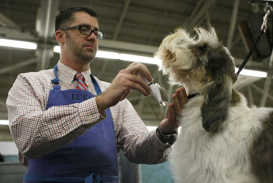 Luke Seidlitz grooms Mr. Wilson before competing in the dog show. The annual Golden Gate Kennel show at the Cow Palace in San Francisco, Calif. attracted thousands of dog lovers and their pets Sunday January 27, 2013. Longtime official Jeanne Bobbitt, who is over 90 years old, still enjoys the parade. Photo: James Tensuan, The Chronicle