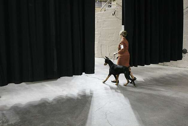 A woman and her Doberman enter the main arena of the Cow Palace to compete in the Golden Gate Kennel Club dog show. Photo: James Tensuan, The Chronicle