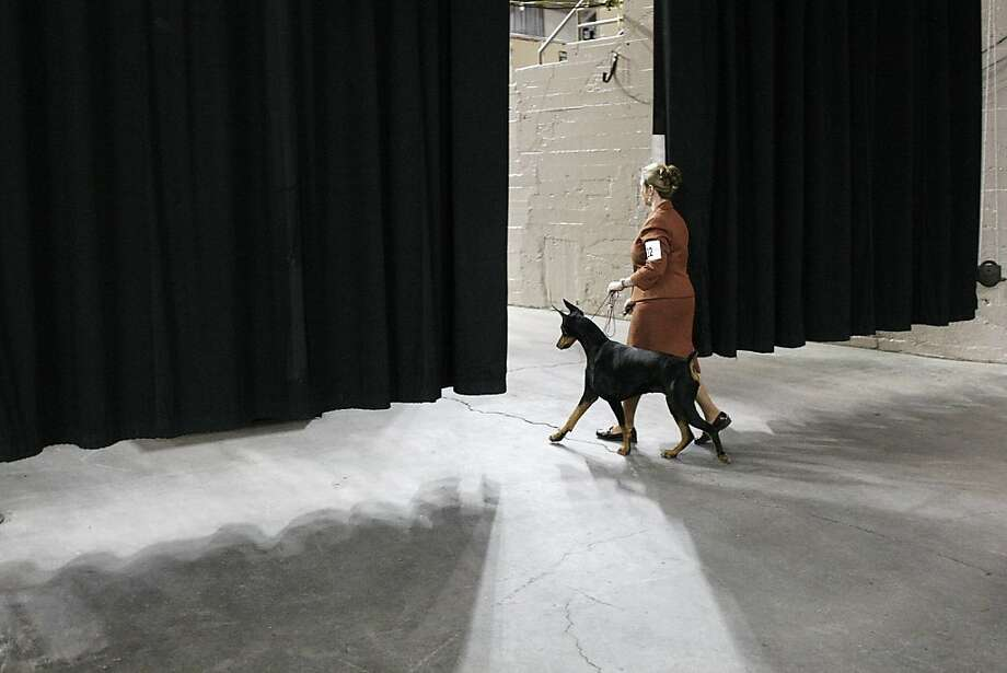 A woman enters the the main arena with her dog before competing. The annual Golden Gate Kennel show at the Cow Palace in San Francisco, Calif. attracted thousands of dog lovers and their pets Sunday January 27, 2013. Longtime official Jeanne Bobbitt, who is over 90 years old, still enjoys the parade. Photo: James Tensuan, The Chronicle