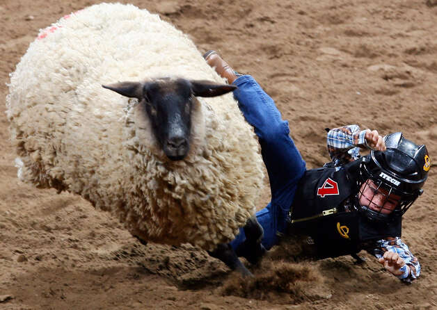 David Wolma falls off a sheep during the mutton bustin' event at the San Antonio Stock Show & Rodeo at the AT&T Center on Feb. 2, 2008. Photo: Edward A. Ornelas, San Antonio Express-News