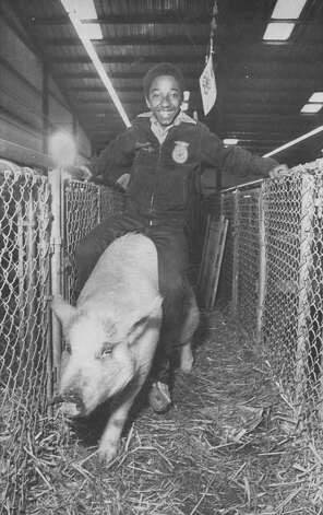 Chris Williams rides his 205-pound hog back into its pen after it participated in competition at the San Antonio Stock Show & Rodeo on Feb. 19, 1982. Photo: San Antonio Express-News File Photo