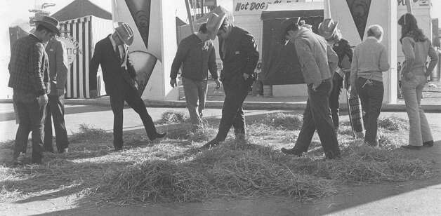 Officials at the San Antonio Stock Show & Rodeo search the hay for a knob that fell off of a champion banner in February 1970. Photo: San Antonio Express-News File Photo
