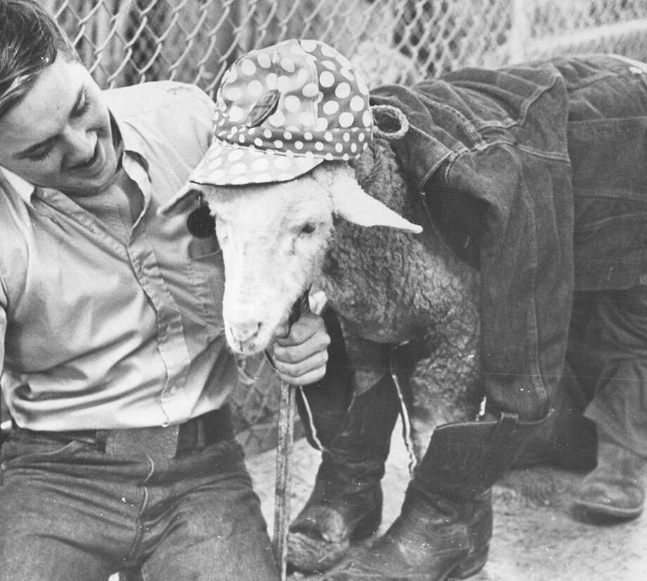 Southwest High School freshman Wayne Steenken shows off his sheep, Doffer, who's dressed to the nines for the San Antonio Stock Show & Rodeo in February 1970. Photo: San Antonio Express-News File Photo