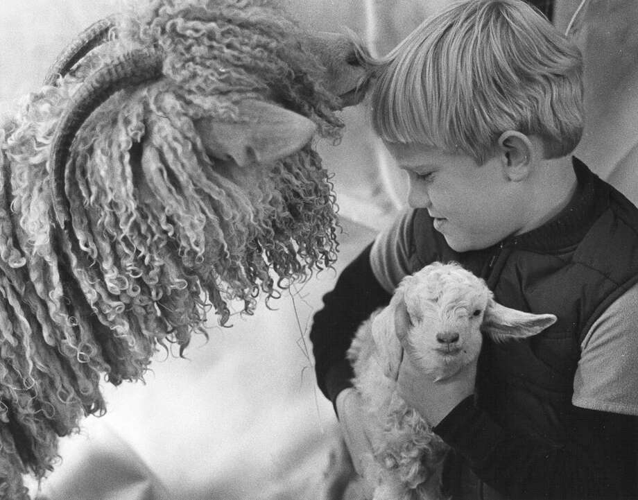 Seth Becker, 6, plays with an angora kid that's 1½ days old as the kid's mother smells Seth's hair at the San Antonio Stock Show & Rodeo on Feb. 11, 1986. Photo: San Antonio Express-News File Photo