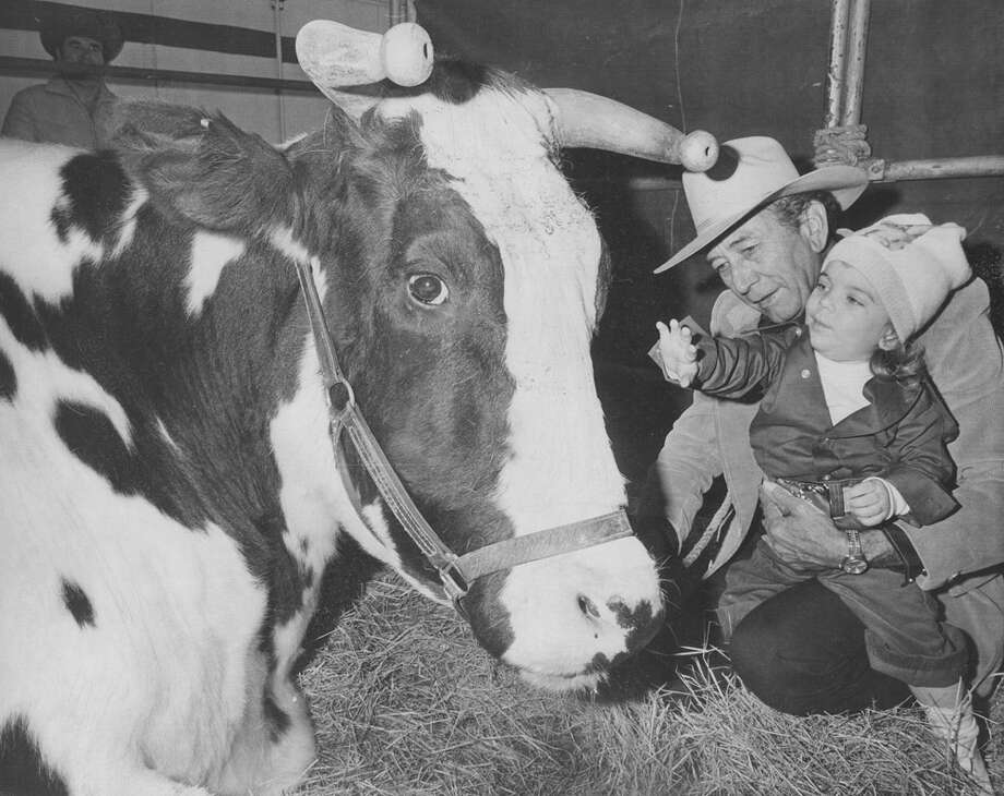 Jenea T. Cooper reaches out to pet the world's largest steer as she's held by her grandfather Rudolph C. Ibanez at the San Antonio Stock Show & Rodeo on Feb. 17, 1978. The steer is 6 feet tall, 11 feet long and weighs 3,400 lbs. It would make 10,000 hamburgers. Photo: San Antonio Express-News File Photo