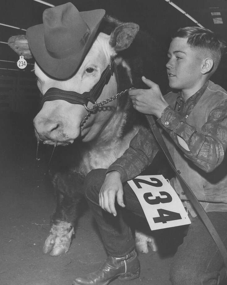 A boy shows off his well-dressed Junior Grand Champion cow at the San Antonio Stock Show & Rodeo on Feb. 11, 1967. Photo: San Antonio Express-News File Photo