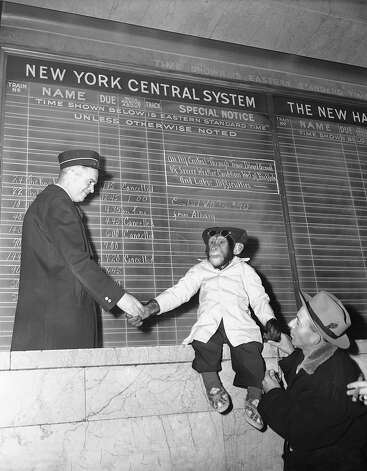 Bonzo, a five-year-old chimpanzee appearing in a forthcoming Hollywood motion picture, sits atop the counter at a waiting room in Grand Central Terminal, New York City on Feb. 5, 1951 to 'congratulate' and 'thank' a train-caller, left, for getting the New York Central's 20th Century Limited into New York. Photo: Tom Fitzsimmons, AP / 1951 AP