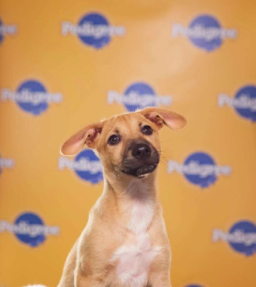 Name: Biscuit Breed(s): Puerto Rican Sato Sex: Female Age: 12 weeksFun Fact: Her mom is Julia Roberts so she is destined for greatness Adoption Organization: The Sato Project Photo: Adele Godfrey, Animal Planet