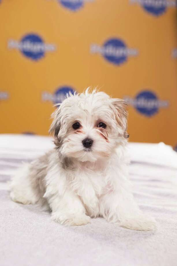 Hero portrait of Eli during Puppy Bowl IX Photo: Adele Godfrey, Animal Planet