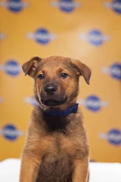 Name: Eli
