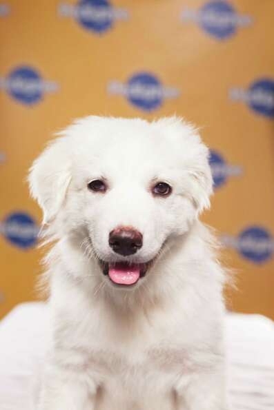 Hero portrait of  during Puppy Bowl IX