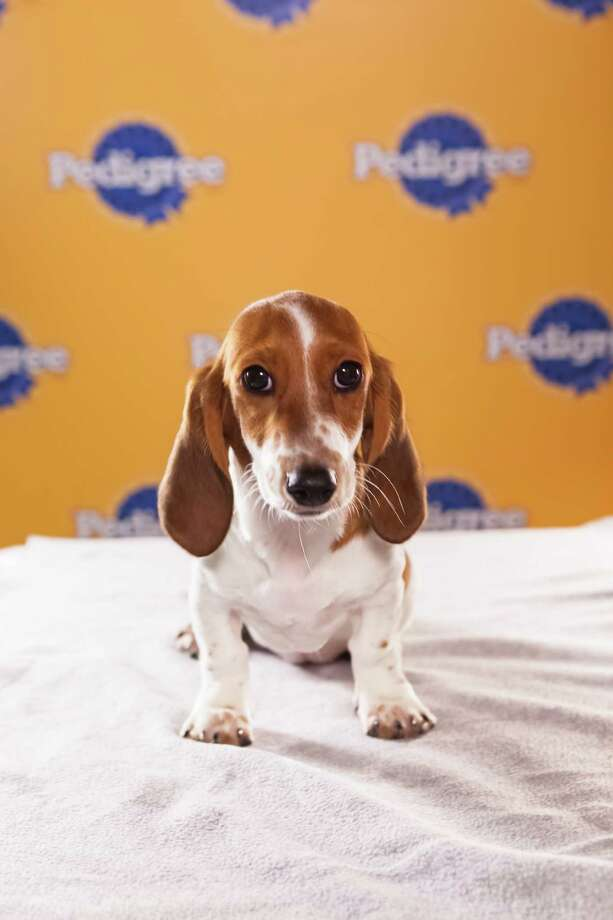 Name: Sally