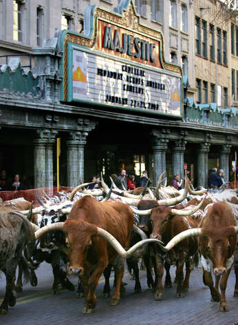 More Longhorns in 2008. Photo: Bob Owen, SAN ANTONIO EXPRESS-NEWS / SAN ANTONIO EXPRESS-NEWS